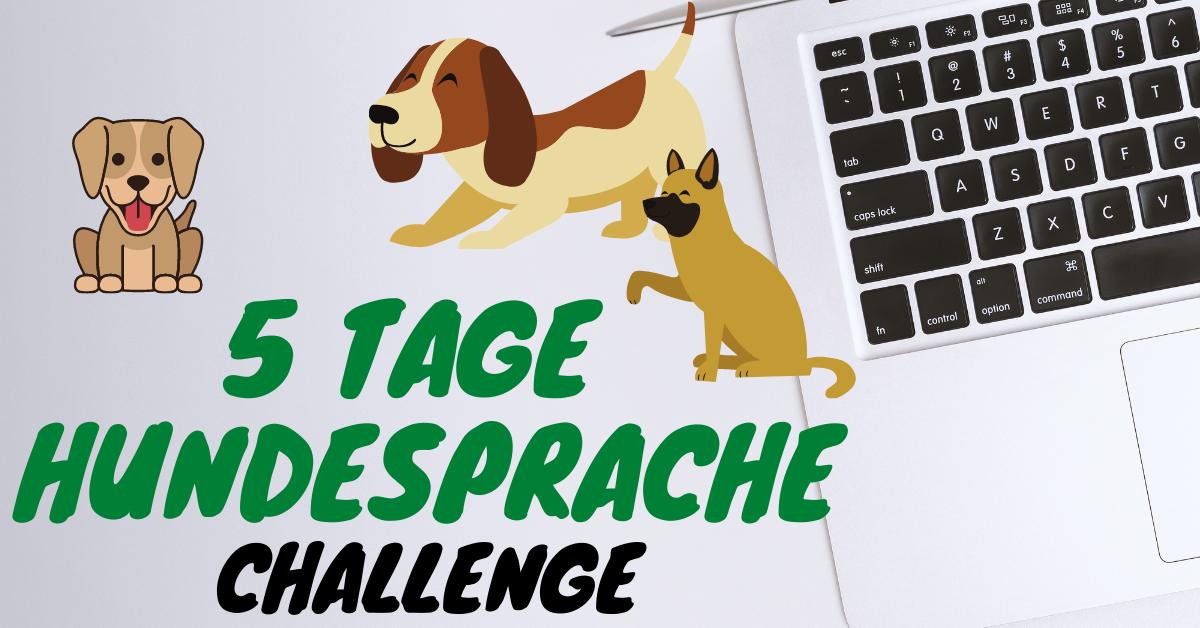 Anmeldung Challenge